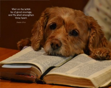 dog-Bible-psalm-27_14
