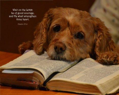 dog-Bible-psalm-27_14