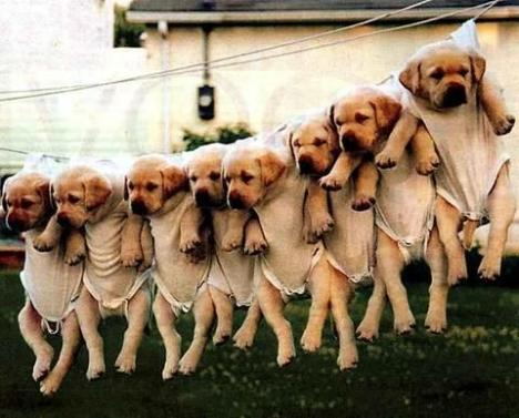 hanging_puppies