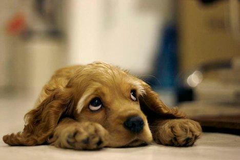 269168-sad_dog